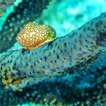 Bonaire Snail Paul Stockmann